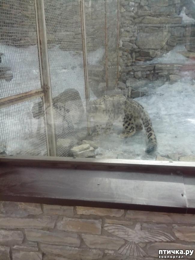 фото 9: Некоторые жители Казанского зооботсада