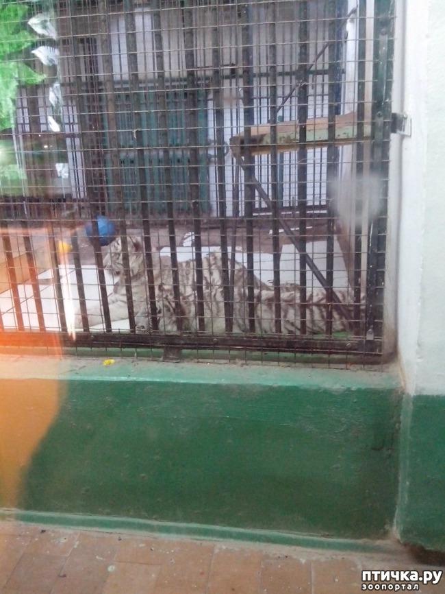 фото 10: Некоторые жители Казанского зооботсада