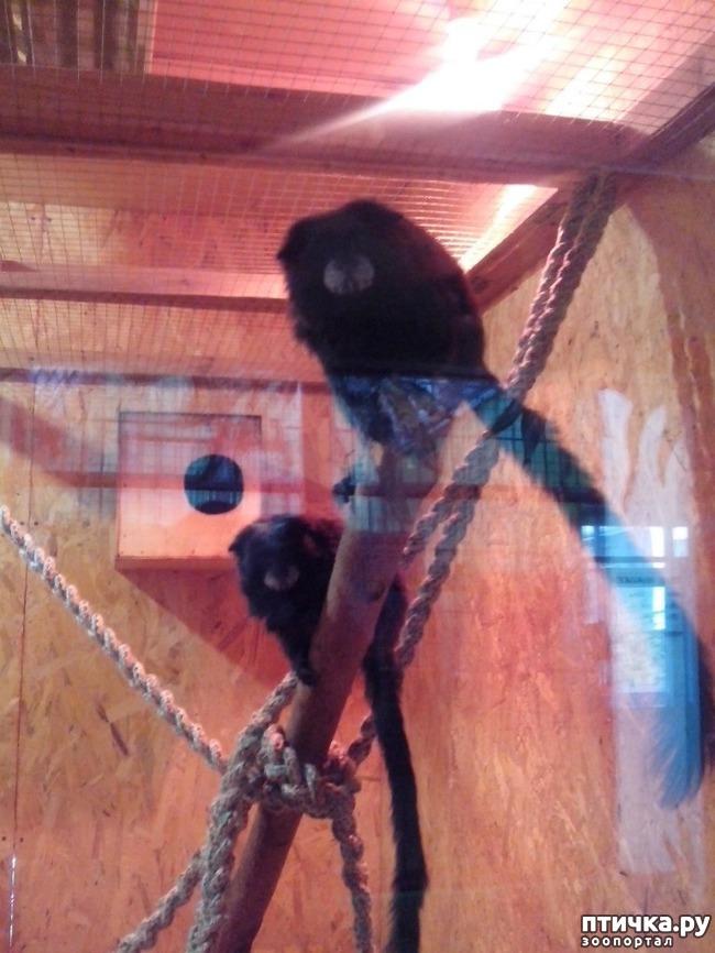 фото 13: Некоторые жители Казанского зооботсада