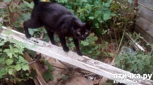 фото: Бездомные кошки или Звездочка-партизанка