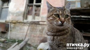 фото: Как быть, если животное потерялось