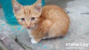 фото: Котенок болеет