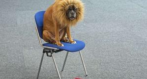фото: То ли лев, то ли видение