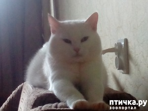 фото: Мусяничка