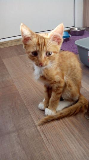 фото: Лечение котенка: есть успехи