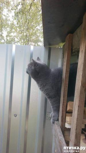 фото: Кот и дача. Новое