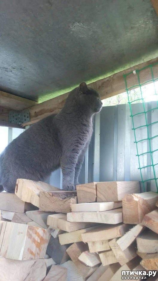 фото 2: Кот и дача. Новое