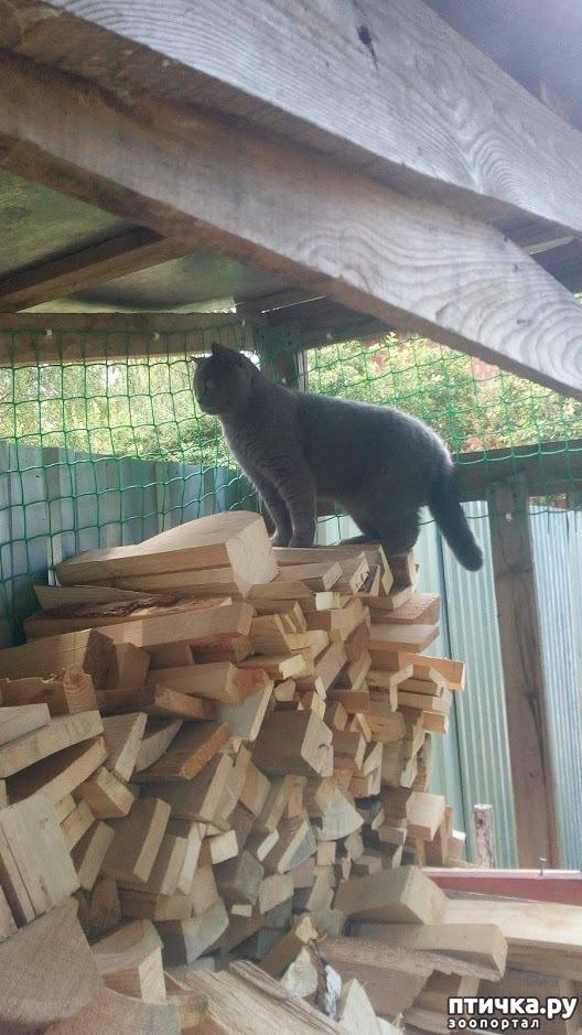 фото 3: Кот и дача. Новое