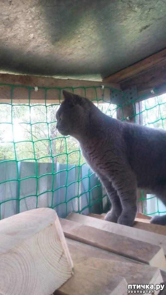 фото 4: Кот и дача. Новое