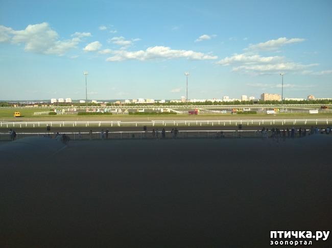 фото 1: Конный праздник на казанский Сабантуй