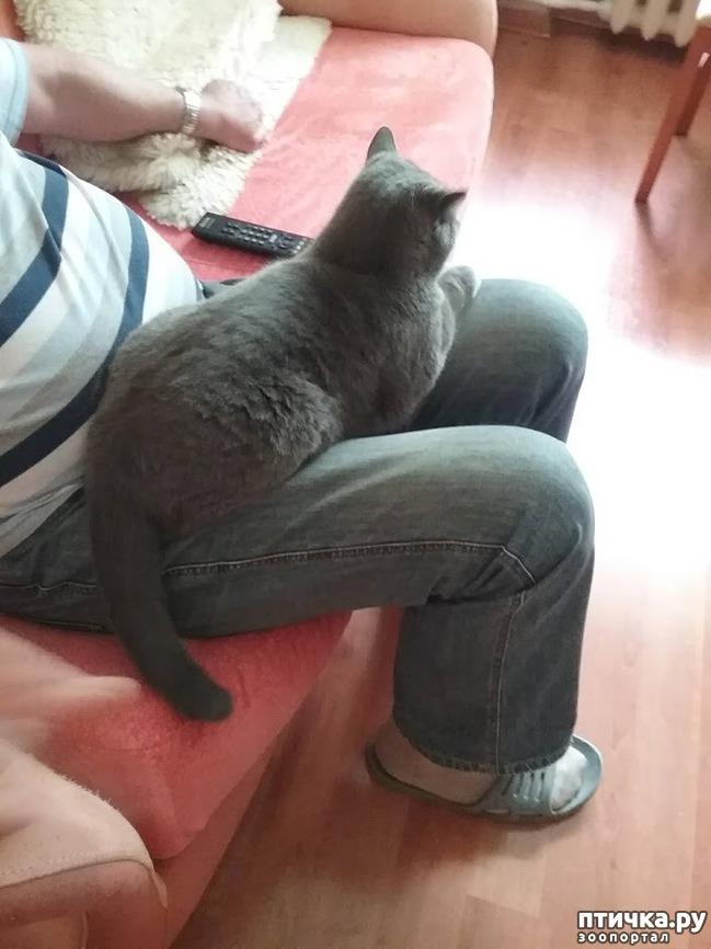 фото 5: Кот и дача. Новое