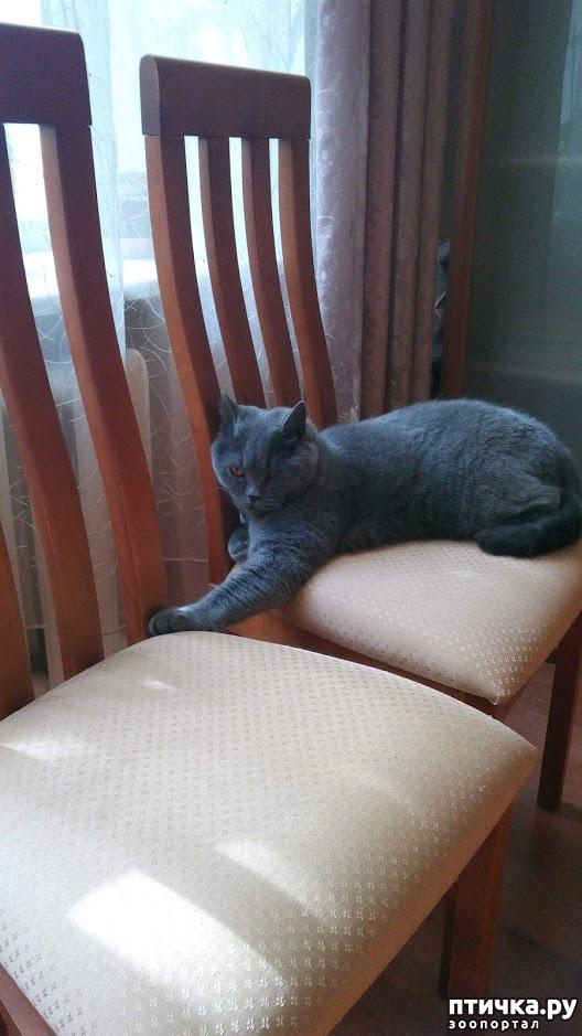 фото 6: Кот и дача. Новое