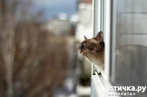 фото: Кошка и свежий воздух