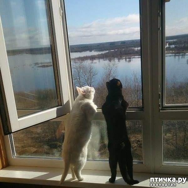 фото 2: Кошка и свежий воздух