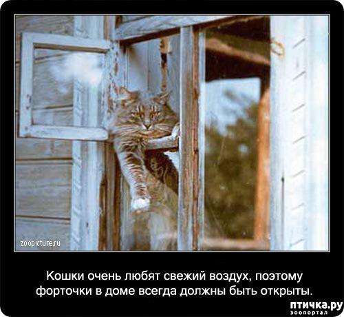 фото 7: Кошка и свежий воздух