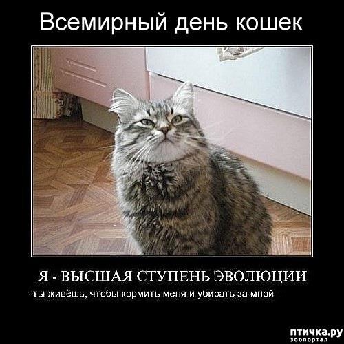 фото 17: Международный День Котиков!
