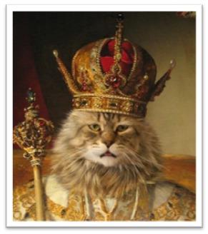 фото 18: Международный День Котиков!