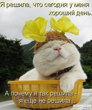 фото 19: Международный День Котиков!