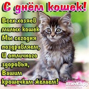 фото: С днём кошек!)
