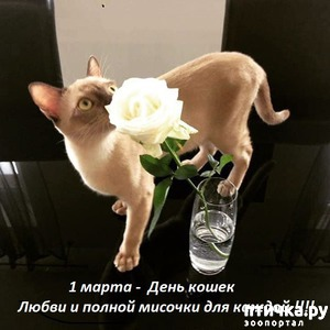 фото: С праздником наших любимых кошек!!!