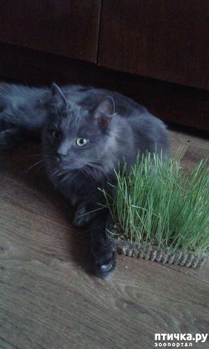 """фото: О празднике """"день кошек"""""""