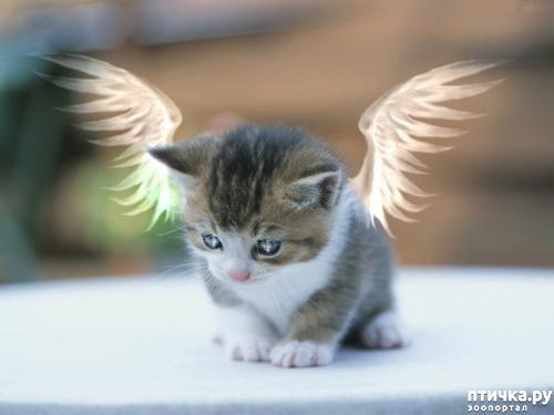 фото 1: Международный День Котиков!