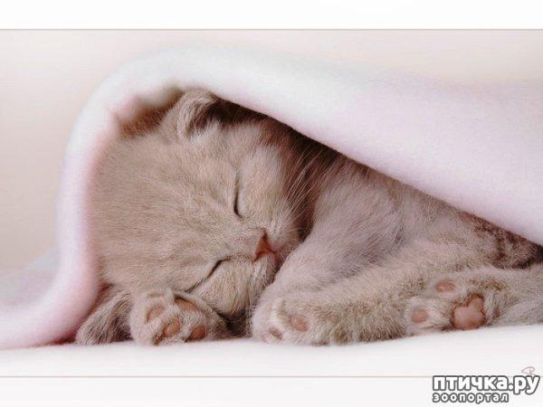 фото 3: Международный День Котиков!