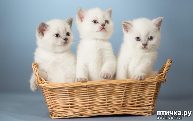 фото 5: Международный День Котиков!