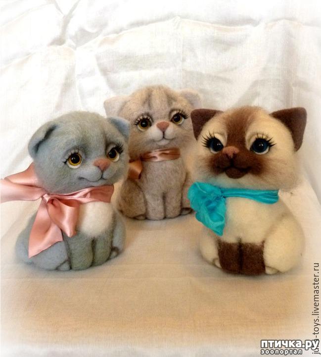 фото 7: Международный День Котиков!