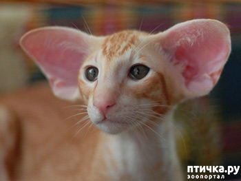 фото 8: Международный День Котиков!