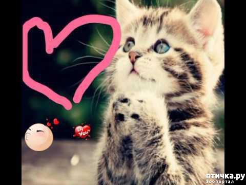фото 9: Международный День Котиков!