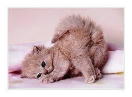 фото 10: Международный День Котиков!