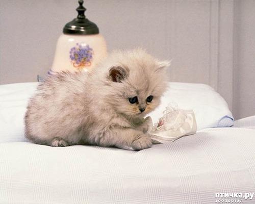 фото 11: Международный День Котиков!