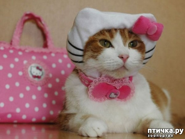 фото 13: Международный День Котиков!