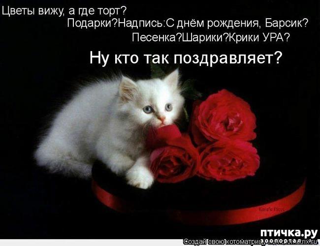 фото 14: Международный День Котиков!