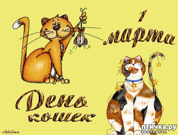 фото 15: Международный День Котиков!