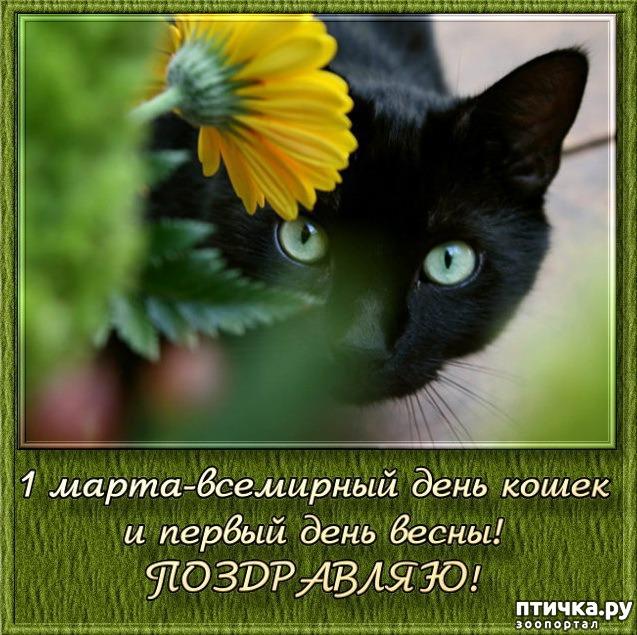 фото 16: Международный День Котиков!