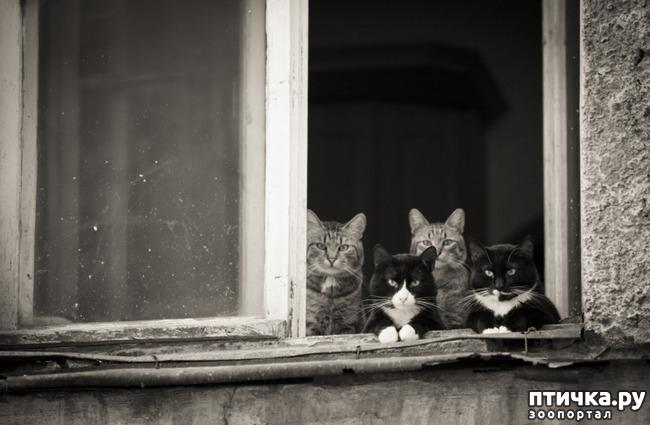 фото 8: Фотографии, от которых на душе становится тепло)))
