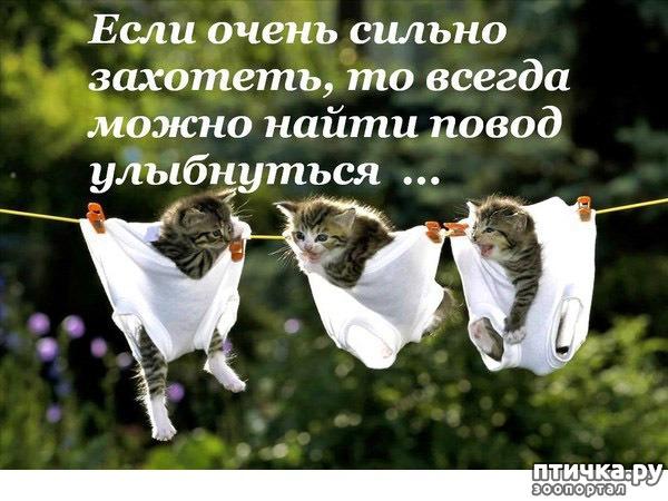 фото 14: Фотографии, от которых на душе становится тепло)))