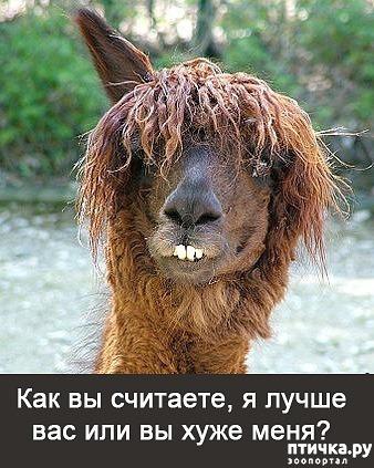фото 16: Фотографии, от которых на душе становится тепло)))