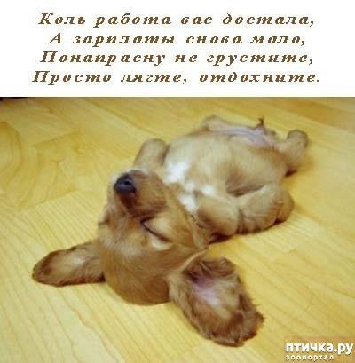фото 17: Фотографии, от которых на душе становится тепло)))