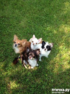 фото: Мои собаки.