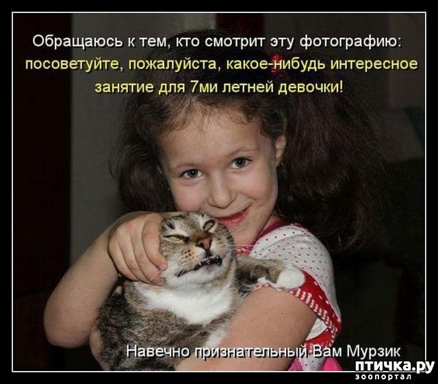 Смешные картинки с надписями кошки и дети