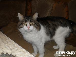фото: Как выжил мой кот Патрик