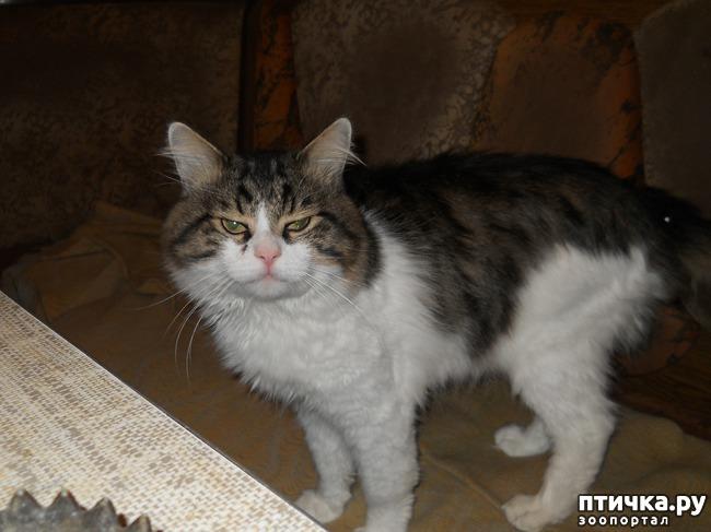 фото 1: Как выжил мой кот Патрик