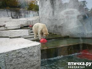 фото: Однажды в зоопарке