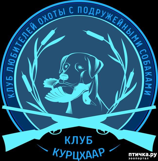 фото 1: Клуб Любителей Курцхааров и Охоты с Подружейными Собаками