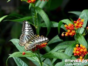 фото: Бабочки