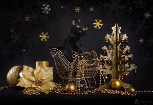 фото: Характер Бомбейских кошек
