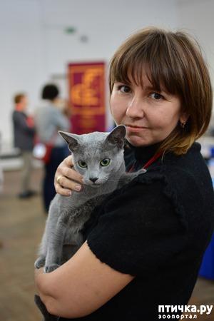 фото: Добро пожаловать на страничку русской голубой породы кошек!
